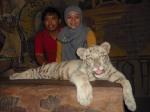sama macan putih